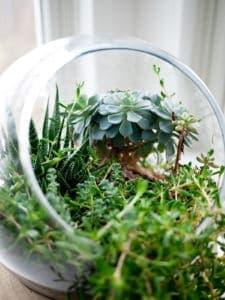 macro-photo-terrarium