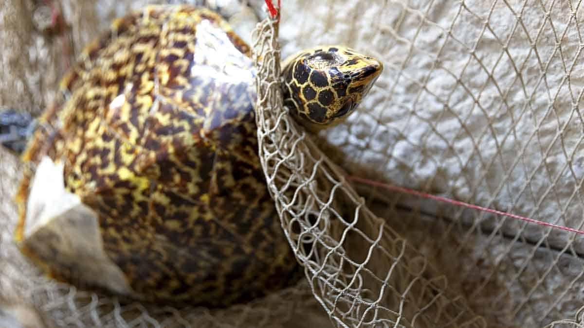 img-sea-turtle